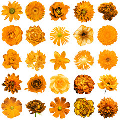 Mix collage of natural and surreal orange flowers 25 in 1: peony, dahlia, primula, aster, daisy, rose, gerbera, clove, chrysanthemum, cornflower, flax, pelargonium isolated on white