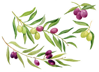 olives,watercolor,food,olive oil,olive tree,Italy,figure,hand,olive branch