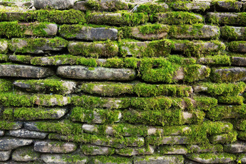 Green moss on old stone wall