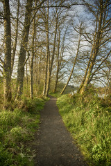 Hiking trail at Netul landing along the Lewis and Clark river on a Spring evening in the Pacific Northwest
