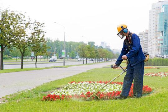 City landscaper man gardener cutting grass around planted flowers with string lawn trimmer