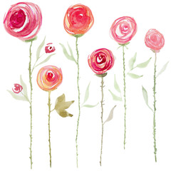 Watercolor rose flowers