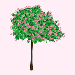A blooming tree, vector illustration