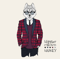 Illustration of husky hipster dressed up in jacket, pants and sweater. Vector illustration