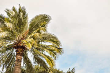 Palm trees at Beverly Gardens Park