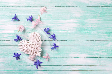 Decorative heart and blue and pink hyacinth flowers   on turquoi