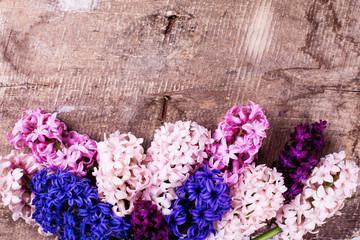 Background with fresh pink, violet, blue, purple hyacinths on vi