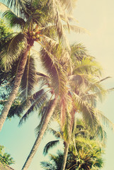 Tropical Palm Tree Beach Nature Toned Bright Light