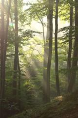 Keuken foto achterwand Bos in mist Lesny poranek