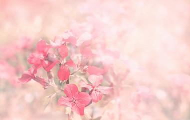 spring violet flowers
