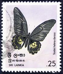 GROOTEBROEK ,THE NETHERLANDS - MARCH 8,2016 : A stamp printed in Sri Lanka (Ceylon) shows Triodes helena darsius, circa 1978