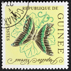 GUINEE - CIRCA 1998: stamp printed by GUINEE, shows butterfly, circa 1998.