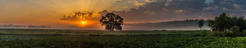 Beautiful sunrise and tree