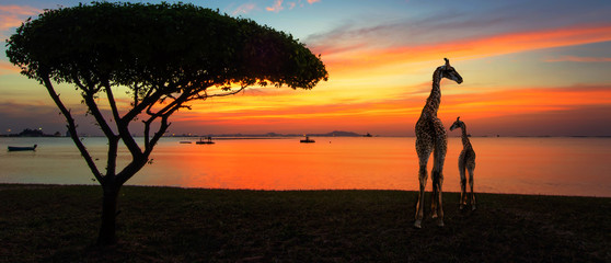 Giraffes in the savannah at sunset