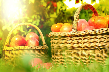 Two wicker basket full of red apples at sunset
