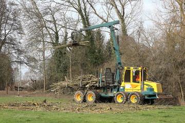 Kranbagger bei Baumfällarbeiten