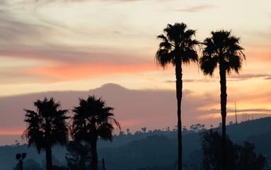 Palm Tree West Coast Tropical California Sunset Skyline