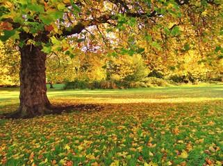 An Autumn Landscape.