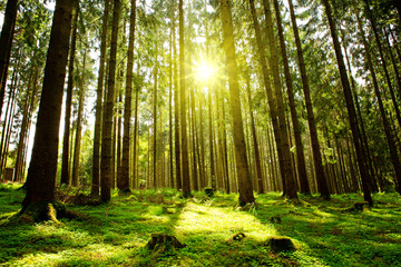 Sunlight in the green forest.