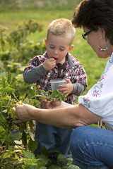 Grandmother and grandson picking berries