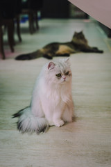 A portraiture of a cat in the cafe with soft light and soft focus. Relax and comfort