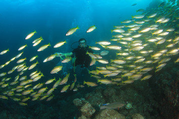 Scuba diving on coral reef with fish