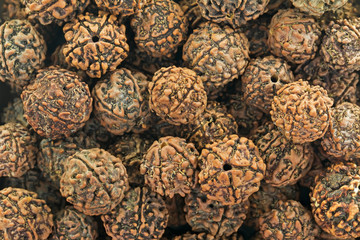 Rudraksha seeds representing the tear of fulfillment shed by Shiva once he emerged from a long period of yogic meditation, the scared seeds are used for prayer beads.