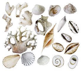 Collection of  watercolor seashells and corals