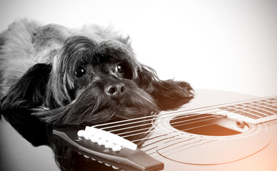 Sad doggie with a guitar.