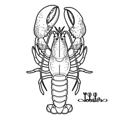 Graphic vector lobster