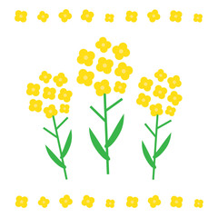 Canola flower vector illustration. Canola flower concept in flat style. Canola flowers symbols