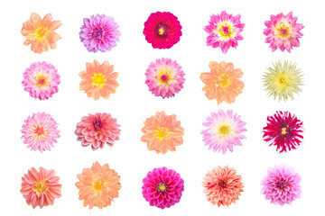 Various dahlia flowers isolated on white background