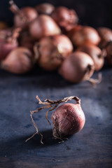 Closeup of rich onions