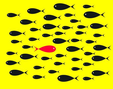Red Fish swim opposite upstream the ton of black fish on yellow