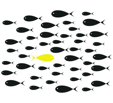 Yellow Fish swim opposite upstream the ton of black fish isolate