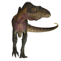 Acrocanthosaurus on White - Acrocanthosaurus was a theropod carnivorous dinosaur that lived in North America during the Cretaceous Period.