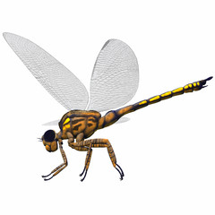 Meganeura Dragonfly Side Profile - Meganeura was an insect dragonfly that lived in the Carboniferous Period of France and England.