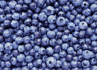 Freshly picked blueberries