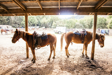 Horses standing under canopy on ranch