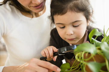 Hispanic mother and daughter examining plants