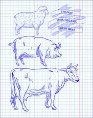 butchering beef diagram, pork, lamb
