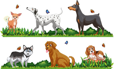 Many type of dogs in the park