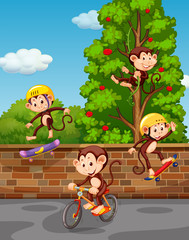 Four monkeys playing on the street