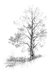 Pine and birch. Embrace. Trees grow, embracing each other. Card. Drawing by Hand.