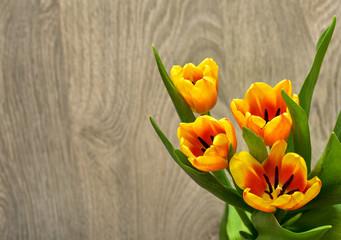 Spring Tulip Flowers. Tulips bunch. Springtime.