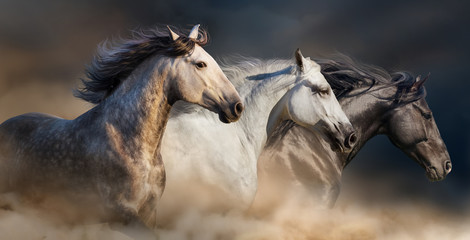Horses with long mane portrait run gallop in desert dust Fotomurales