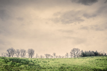 Tree silhouettes on a green field