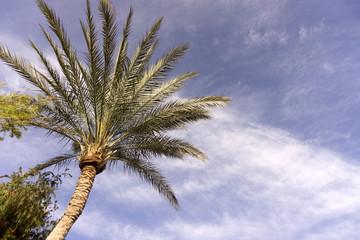 Palm Trees on against a beautiful blue sky