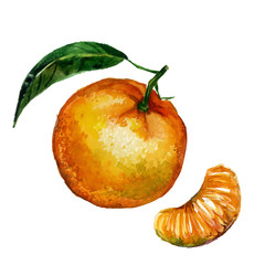 Watercolor tangerine isolated
