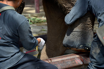 People cure elephant
